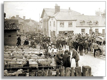 Sheep fair in Builth,c1905